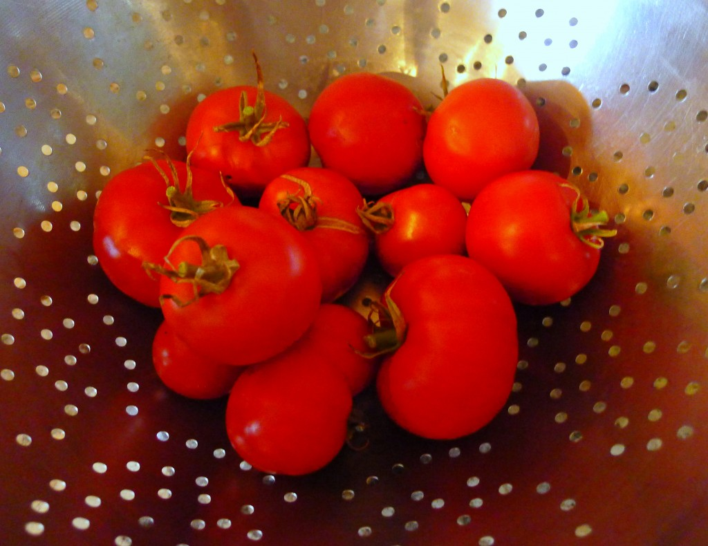 Tomatoes in a colander
