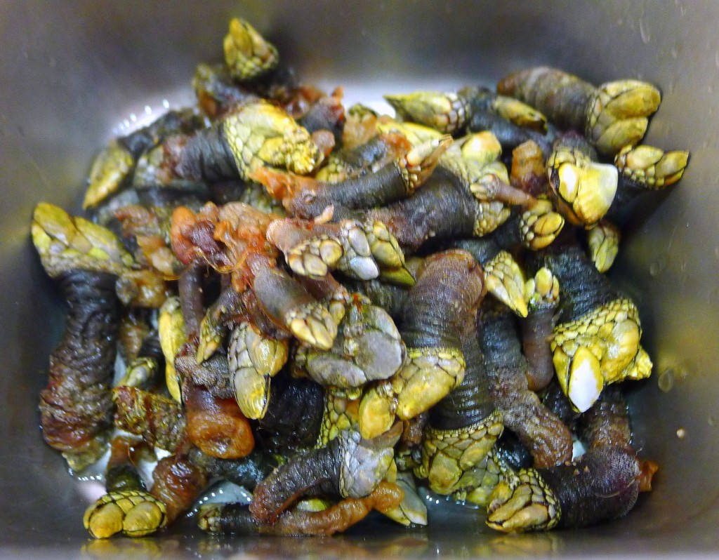 Prepped percebes 2